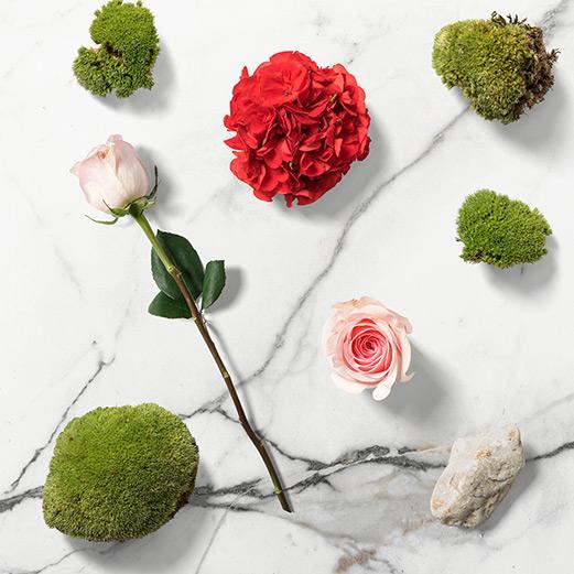 A Smeraldino örök rózsáról