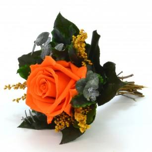 Smeraldino B Lucy (Narancs),