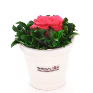 Smeraldino C Ida (Pink),