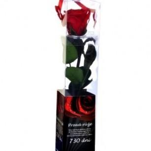 Smeraldino Mini Rózsa,
