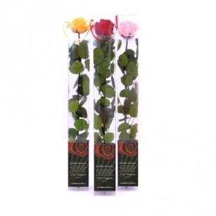 Smeraldino Standard Rózsa,