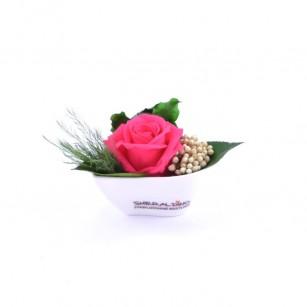Smeraldino A Aneta (Pink),